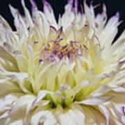 Flower Dahlia. Macro Art Print