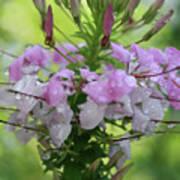 Flower Dew Beauty Art Print