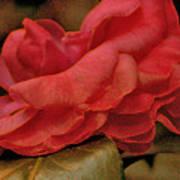 Flower Dusting Art Print