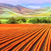 Flower Field Near Los Osos Art Print