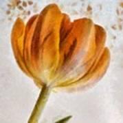 Flower - Id 16235-142750-0708 Art Print