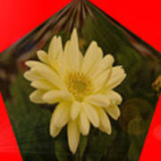 Flower In A Pentagon  Art Print