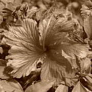 Flower In Sepia Art Print