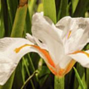 Flower In The Grass Art Print