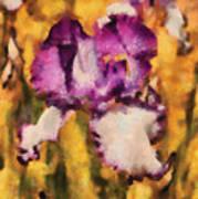 Flower - Iris - Diafragma Violeta Art Print