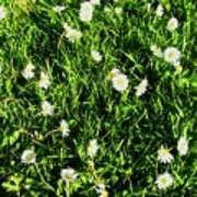 Flower Kissed Fields Art Print