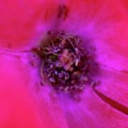 Flower Macro 3 Art Print