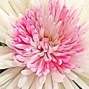 Flower Macro. Art Print