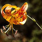 Flower Of Beauty Art Print