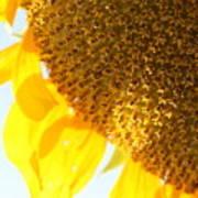 Flower Of The Sun Art Print