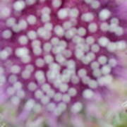 Flower Photograph2  Art Print