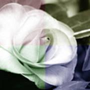 Flower Quadrant Colors Art Print