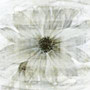 Flower Reflection Art Print by Frank Tschakert
