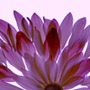Flower Rise- Lavender Art Print