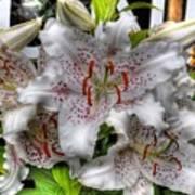 Flower Shop Lillies Art Print