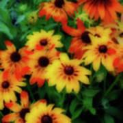 Flower Sunshine Art Print