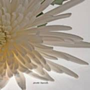 Flower-white Art Print