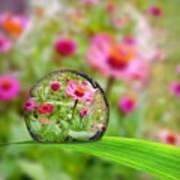 Flowerdrop Art Print