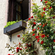 Flowered Window Art Print