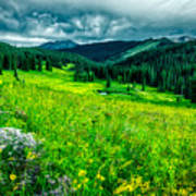 Flowering Colorado Mountain Meadow Art Print