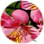 Flowers # 8728_2 Art Print