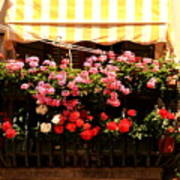 Flowers And Awning In Venice Art Print