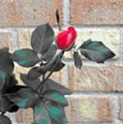 Flowers And Bricks Art Print