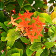 Flowers And Foliage Art Print