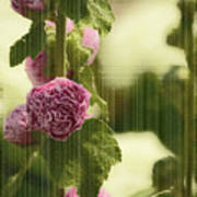 Flowers Behind The Screen Art Print