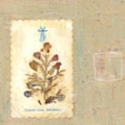 Flowers From Bethlehem  Art Print