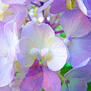 Flowers Hydrangeas Art Prints Floral Garden Baslee Troutman Art Print