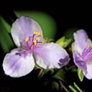 Flowers In Natural Light Art Print