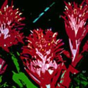 Flowers In Red Art Print