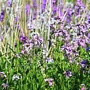 Flowers In The Field  Art Print