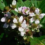 Flowers Of Berries Art Print