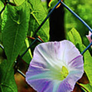 Flowers On The Fence 1 Art Print