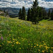 Flowers On The Hillside Art Print