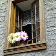 Flowers On The Sill Art Print