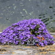 Flowers On The Stone Wall Art Print