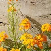 Flowers Orange Print by Warren Thompson