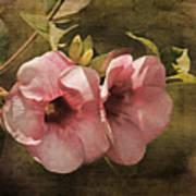 Flowers - Purple Allamanda 2 Art Print