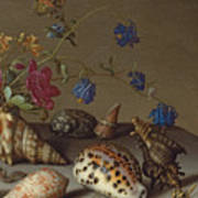 Flowers, Shells And Insects On A Stone Ledge Art Print