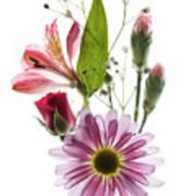 Flowers Transparent 1 Art Print