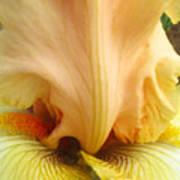 Flowerscape Yellow Iris One Art Print