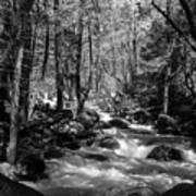 Flowing Creek Art Print