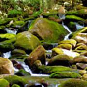 Flowing Mountain Stream Art Print