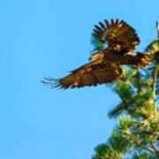 Fly Like An Eagle Art Print