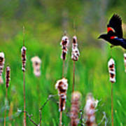 Flying Amongst Cattails Art Print