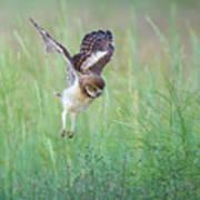 Flying Baby Burrowing Owl Art Print