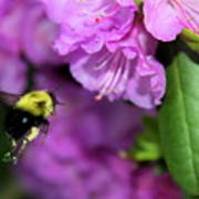 Flying Bee Collecting Pollen Art Print